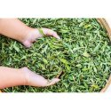 Organic Stevia Dried Leaves