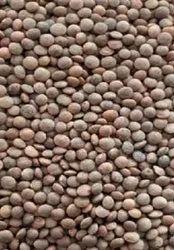 Black Sabut Masoor Dal, High in Protein