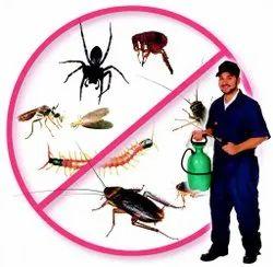 Termite Pest Control Service, in Delhi and NCR