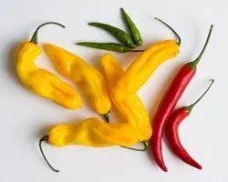 Green World Chilli Hot Pepper Yellow Desire Seeds