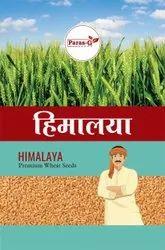 Natural Paras Himalaya Research Wheat Seeds, Packaging Type: Bag, Packaging Size: 20 Kg