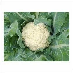 White A Grade Fresh Cauliflower, Gunny Bag, 10 Kg