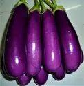 Brinjal Eggplant F1 Purple Seeds(50 seeds)