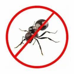 Black Ants Control Services