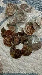 Ammonite Fossil Stone