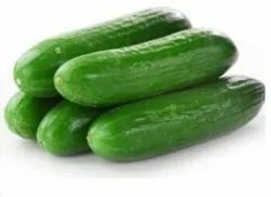 A Grade Fresh Green Cucumber, Carton, Packaging Size: 5 Kg