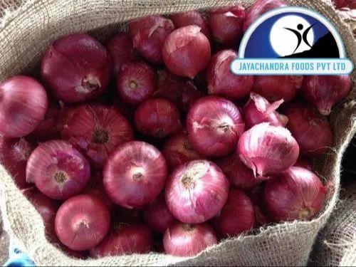 Export Quality Onions - Dubai Quality Onions Wholesale