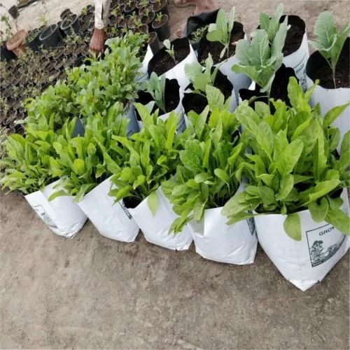 White LDPE Grow Bag
