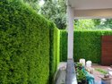 Artificial Grass Mat - Leaf Hedges