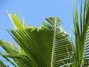 Coconut Trap for Controlling Rhinoceros Beetle (Oryctes Rhinoceros)