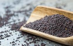 Black Mustard - Sarson - Kali Sarso