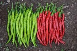Hybrid Chilli Seeds ( Hot Paper), Pack Size: 250gm