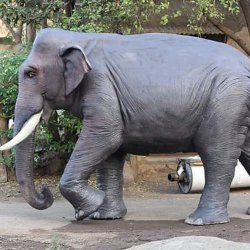 FRP Animal Statue, for Exterior Decor
