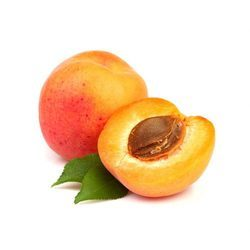 Apricots Cold Storage Rental Services
