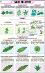 Types Of Leaves For Botany Chart
