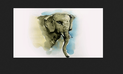 Hobitute Drawing And Colouring Elephant Using Water Colour