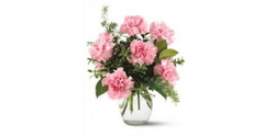 Pink Carnation Flowers