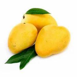 Fresh Organic Mango, Packaging Type: Corrugated Box
