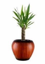 Small Apple Pot Wooden