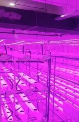 Hydroponic Indoor Grow Lights