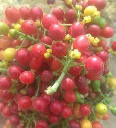 Black Dry Giloy Seed, Grade Standard: Medicine Grade, for Ayurvedic
