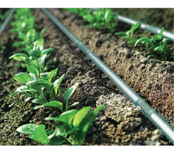 Plants Drip Irrigation