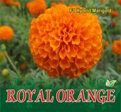 Royal Orange F-1 Hybrid Marigold Seeds, for Agriculture Purpose