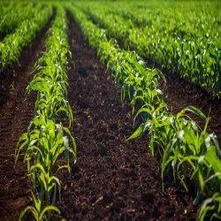 Bio Vert Fertilizers