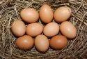 鸡肉Desi棕色鸡蛋,更多的是欧米茄,包装类型:盒子