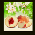 Peach Reed Fragrance