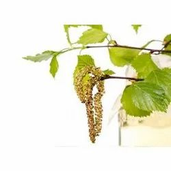 Birch Essential Oil Sweet
