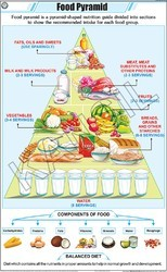 Food Pyramid For General Chart