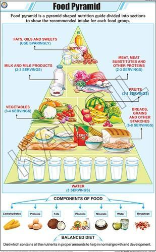 Full Color Art Paper Laminated Food Pyramid For General Chart Size