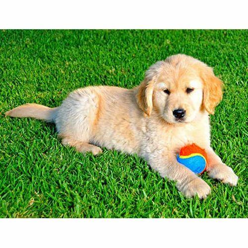 Pet Friendly Artificial Grass at Rs 42/square feet | Kalbadevi | Mumbai| ID: 15503388262