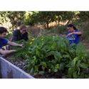 Horticulture Landscape