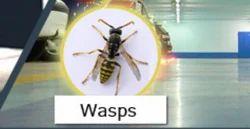 Waps Commercial Wasps Pest Control Services