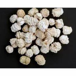 Dried Kachri, Jute Bag, Packaging Size: 30 kg