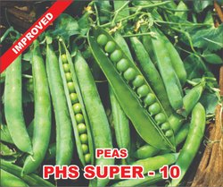 Natural Peas Seed Super - 10, For Agriculture