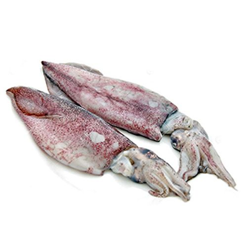 squid fish for household and mess rs 275 kilogram aum traders