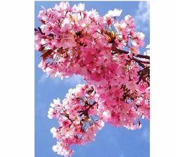 Pink Blossom Fragrance