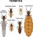 Yearly Bee Termite Pest Control Service