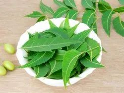 Dry Neem Leaves