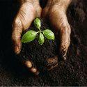 Coir Pith Compost