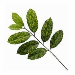 Patabahar Leaf Bunch