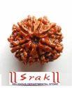 8 Mukhi Rudraksh Beads