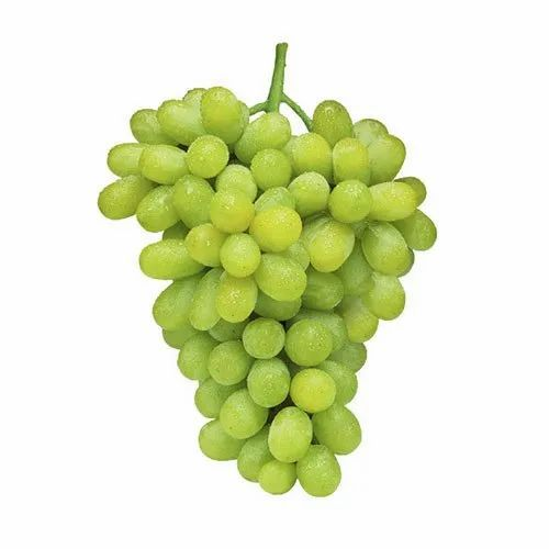 Green Fresh Thompson Seedless Grapes, Rs 70 /kilogram Aarya Cold Storage & Exports