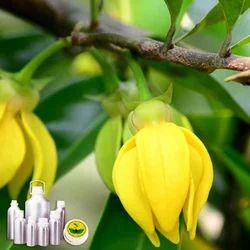 Ylang Ylang Oil 1st Grade Certified Organic