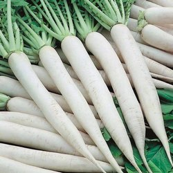 Agricultural Radish Seeds