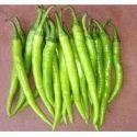 Green Chilli Seeds HYB -108