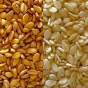 Sesame Seed for Cold Storage Rental Services